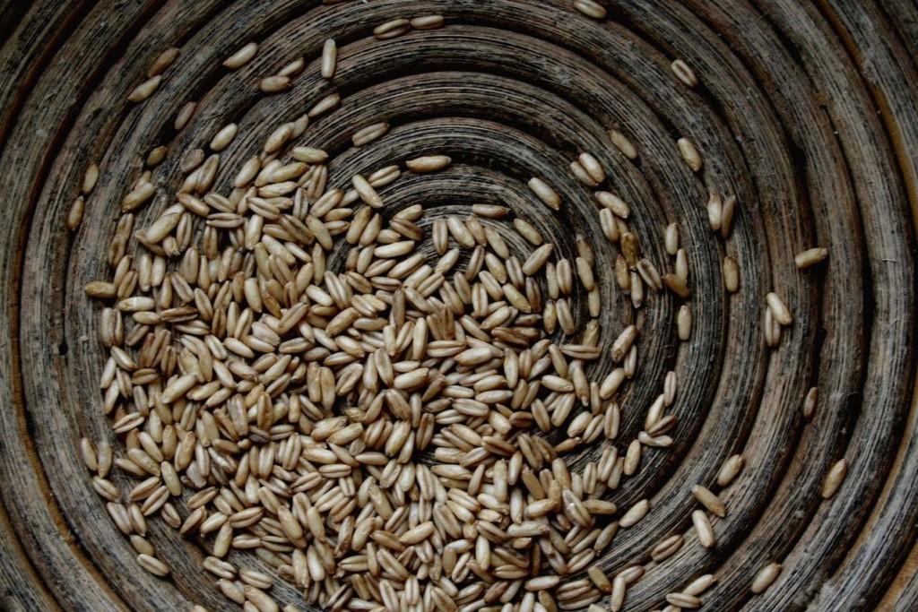 Gatunki zbóż ozimych